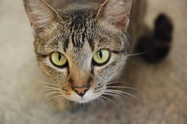 Mon chat urine partout dans la maison que faire - Comment empecher un chat de faire pipi partout ...