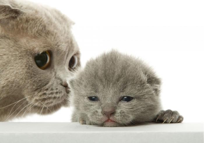 Il baise une bonne chatte mature - Video sur BonPorncom