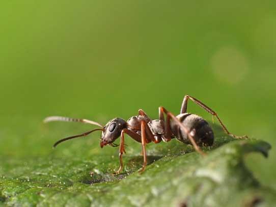 77 pour que les fourmis restent dehors vrcamping le site 1 au canada sur le monde du. Black Bedroom Furniture Sets. Home Design Ideas